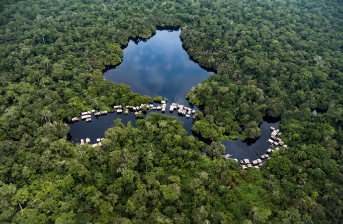 Forêt enRDC: Greenpeace accuse Kinshasa d'attributions opaques